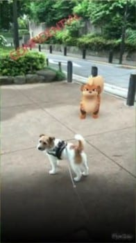 Pokemon GO, growlithe