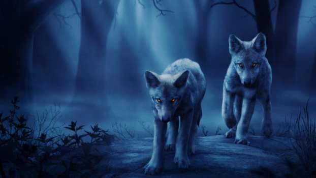 Wild Wolf Cubs HiQ Theme