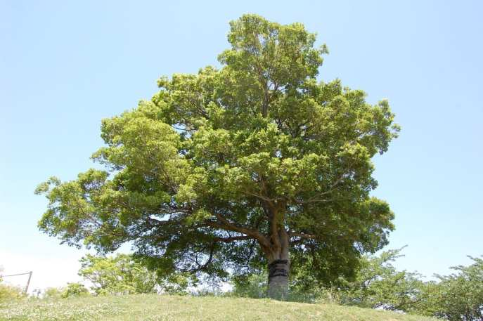 Muv-Luv Tree (10)