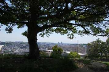 Muv-Luv Tree (13)