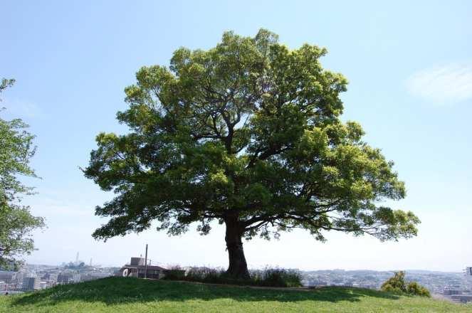 Muv-Luv Tree (4)