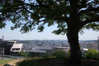 Muv-Luv Tree (5)