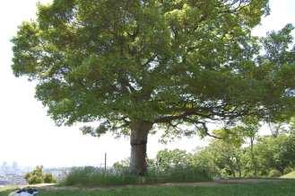 Muv-Luv Tree (6)