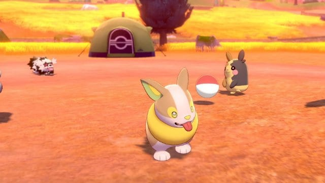 Pokemon camp, reasons to play pokemon sword and shield