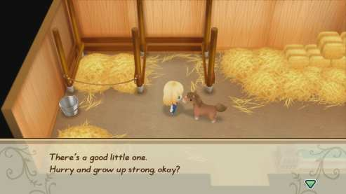 Story of Seasons Friends of Mineral Town (10)