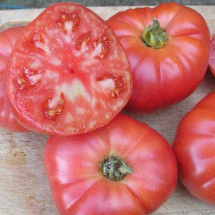 """Tomato """"Granny Cantrell"""""""