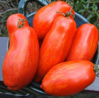 """Tomato """"Speckled Roman"""""""