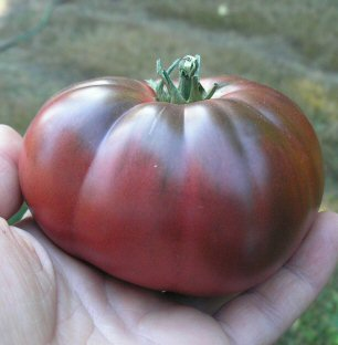 "Tomato ""Cherokee Purple"""