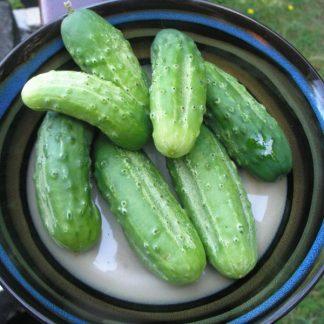 """Cucumber """"Paris Pickling"""""""