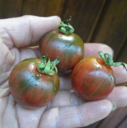"Tomato ""Black Vernissage"""