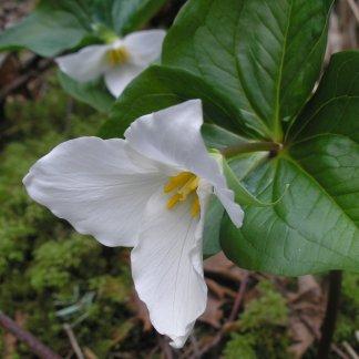 Perennial Seed