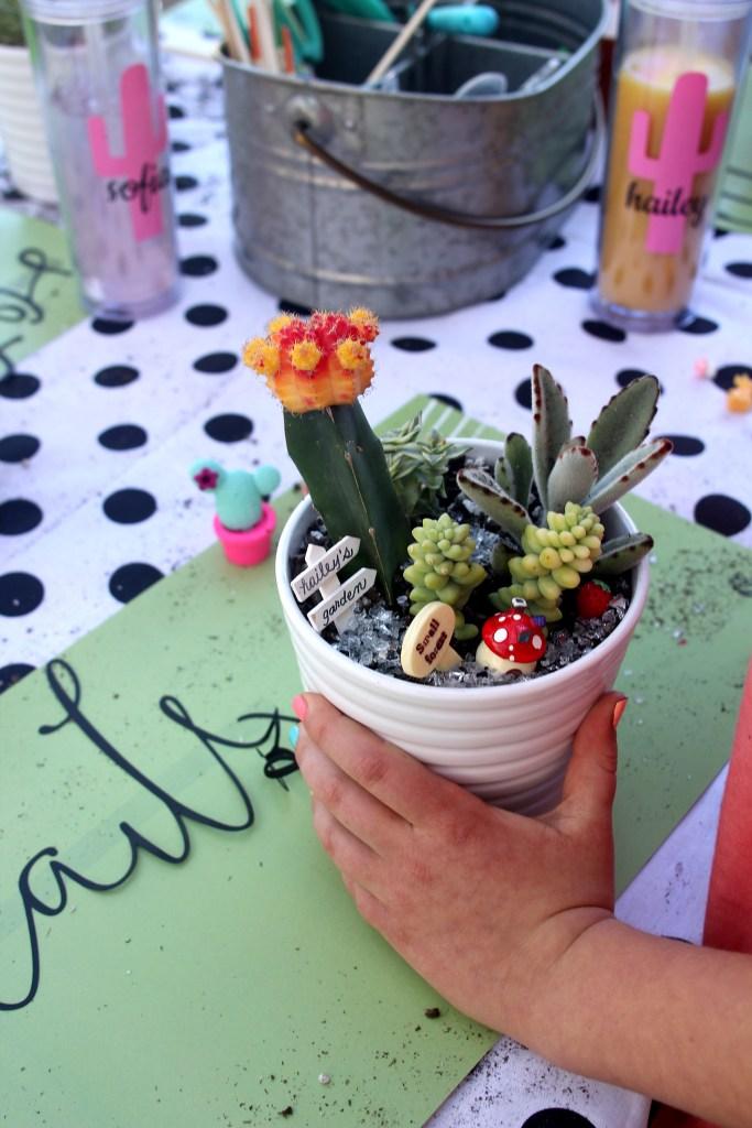 A Succulent & Cactus Planting Party
