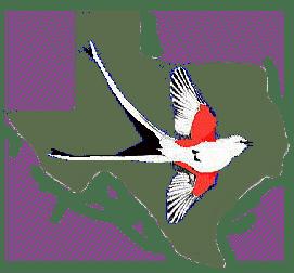 Texas Ornithological Society