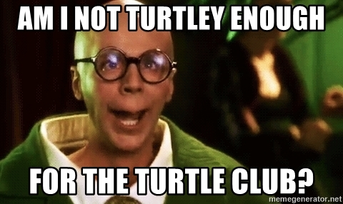 am-i-not-turtley-enough-for-the-turtle-club
