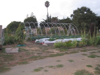 Hoop house beginning