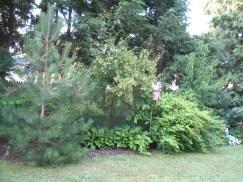 12508030@N06_7203420386_2005.5 client garden (27)