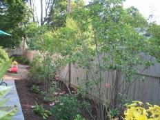12508030@N06_7203451820_2005.5 client garden (36)