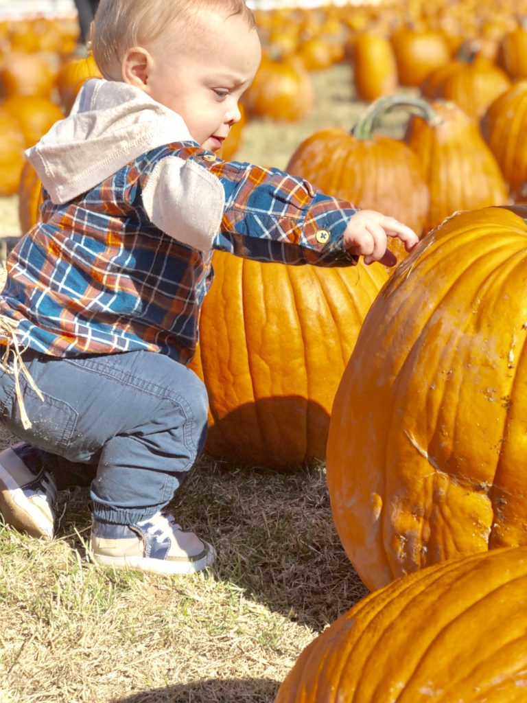 The Roloff Farm located in Hillsboro, Oregon is a must visit pumpkin patch if you are in the Portland, Oregon area. The Roloff Farm is very family friendly and good for babies, toddlers, and kids!