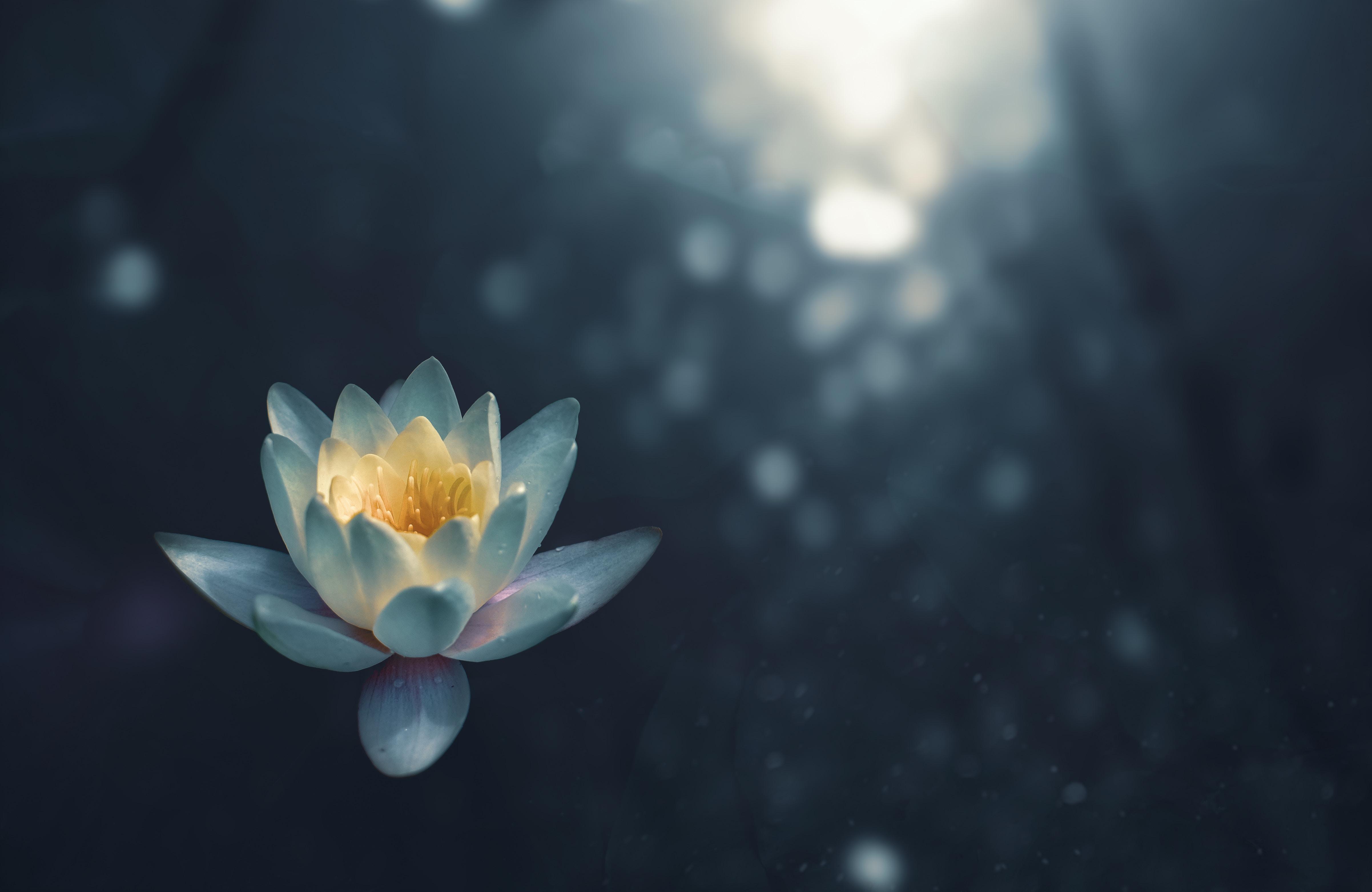 会いたい人に会う誘導瞑想