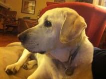 This dog. (RIP)