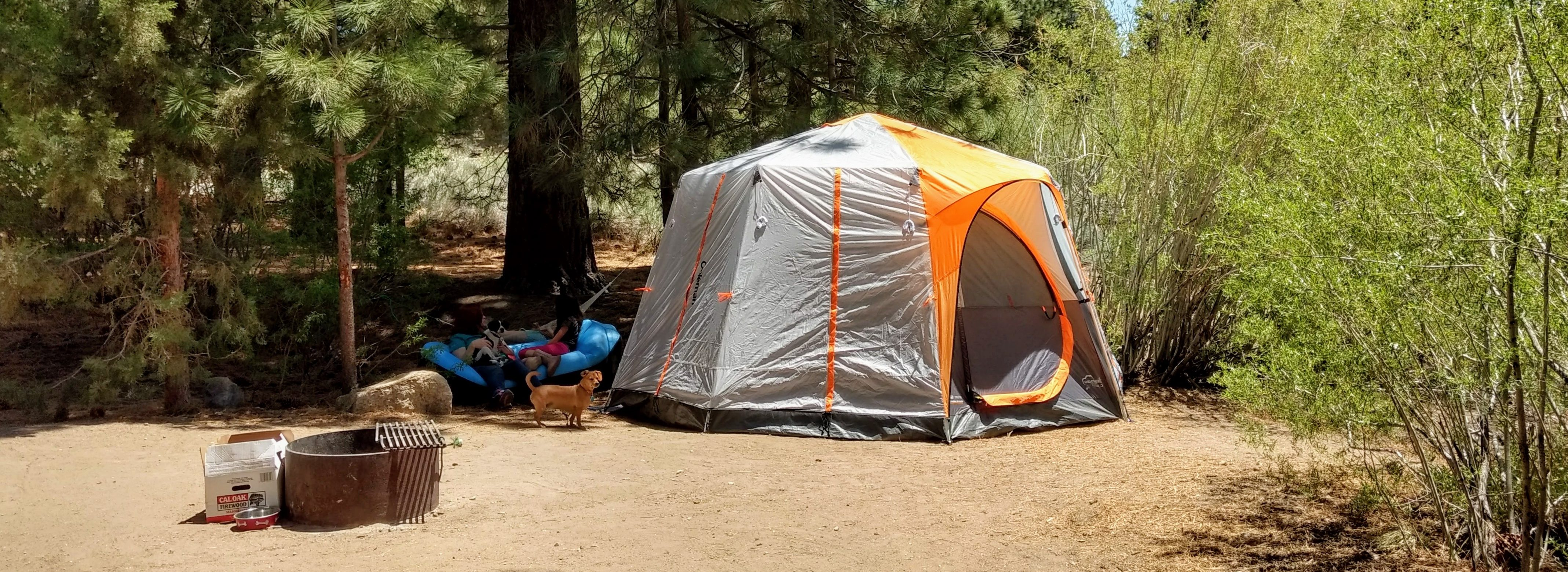 Coleman Octagon 98 Signature Tent & Quest for the Best Family Tents of 2018 u2013 Twisted Bezel