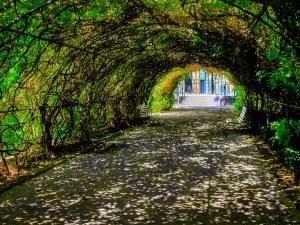 Leafy Arch - Adelaide Botanic Gardens