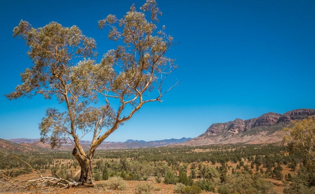 Aroona Valley - Flinders Ranges, South Australia
