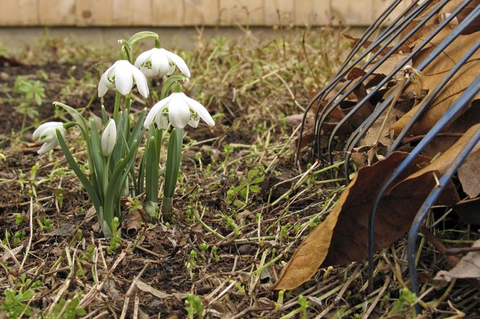 spring clean ups