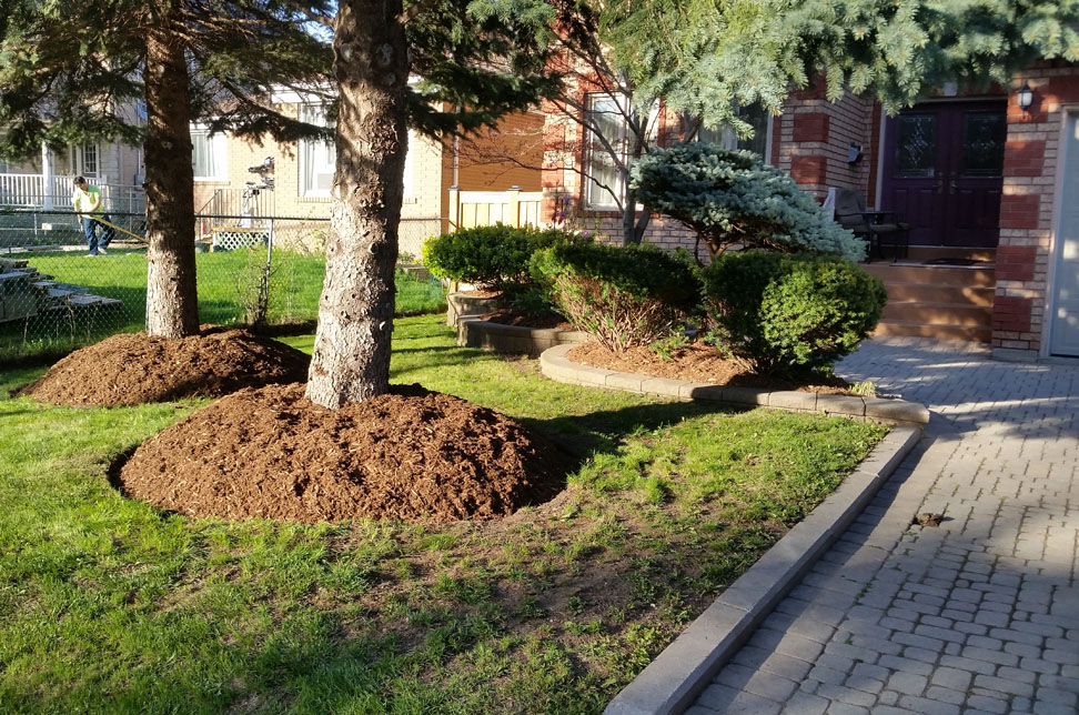 gardens and mulch install in scarborough