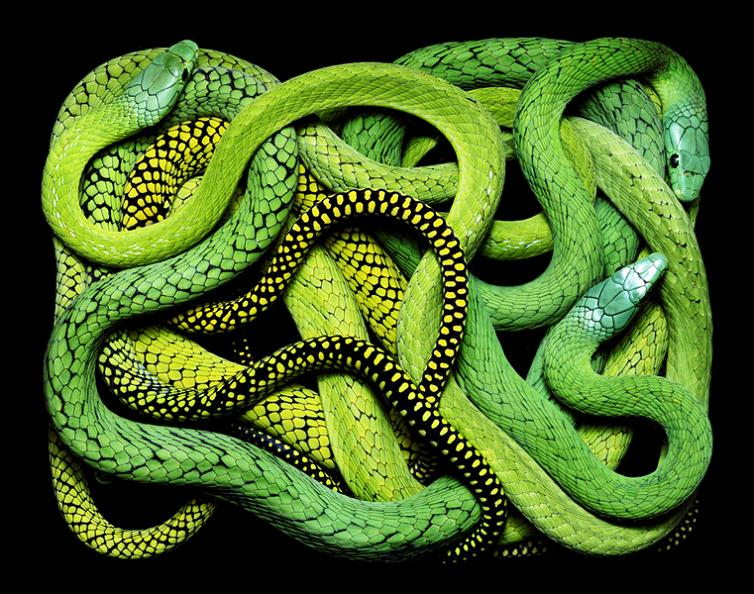 brilliant-snake-colors-guido-mocafico