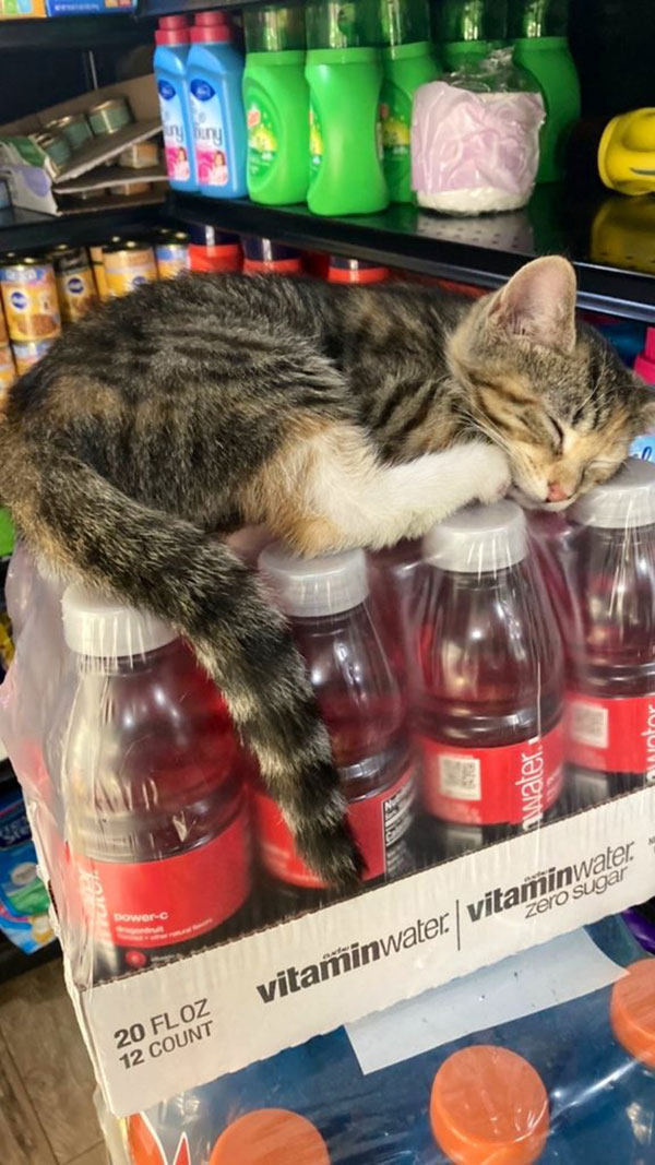 best of bodega cats twitter 11 This Twitter Account is Dedicated to Bodega Cats and Its the Best
