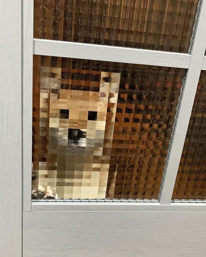 pixel dog through window door funny 1 Pixel Dog