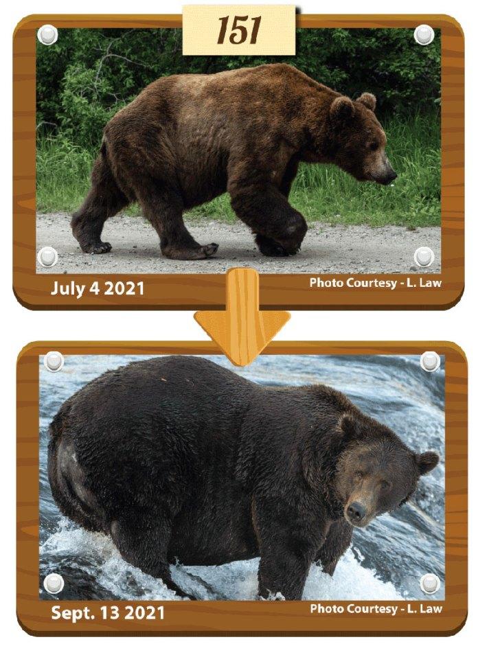 fat bear week 2021 winner otis 1 Congratulations to Otis, Your 2021 Fat Bear Week Champion
