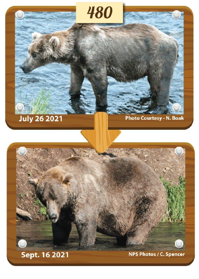 fat bear week 2021 winner otis 2 Congratulations to Otis, Your 2021 Fat Bear Week Champion