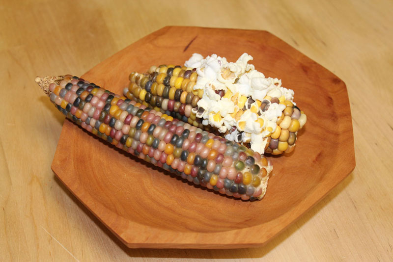 This is Glass Gem Corn Its Real and Looks Amazing