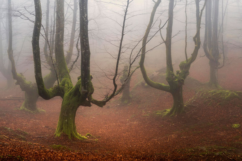 A Mystical Forest in Spain TwistedSifter