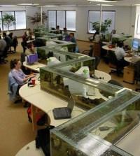 Office Aquarium Doubles as Desk Divider TwistedSifter