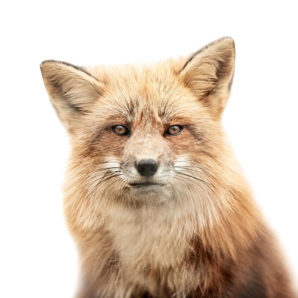 animal portraits on stark