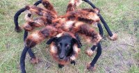 Dog Wears Spider Costume at Night, Scares the Crap Out of ...