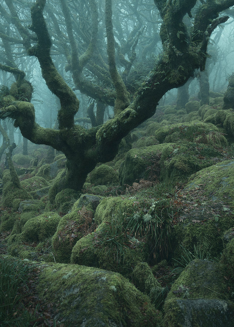 Theres a RealLife Enchanted Forest and Its In Dartmoor