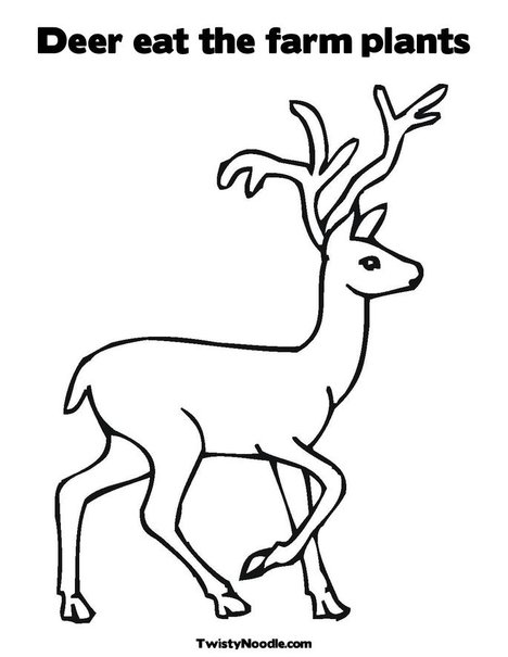plant and animal cell coloring pages