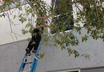 Exterior Windows Deep Clean Up in Carrollton TX 02 078d59fec9fae076e46d6133bea21491 350x245 100 crop Post Construction Exterior Windows Cleaning in Carrollton, TX