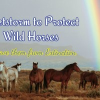 Protect Wild Horses Tweet Sheet - Please share and tweet
