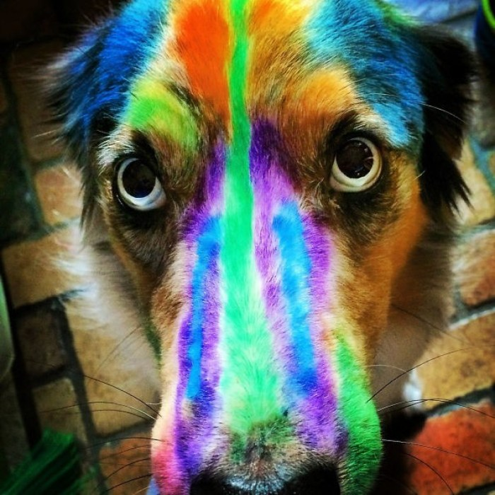 Our Dog Is So Ready For The Kids To Go Back To School (Non-Toxic Markers)