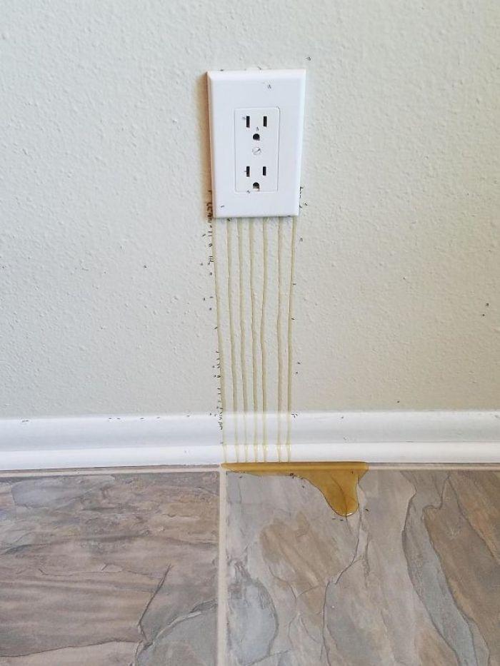 Так много пчел в стене, что их мед течет через выход
