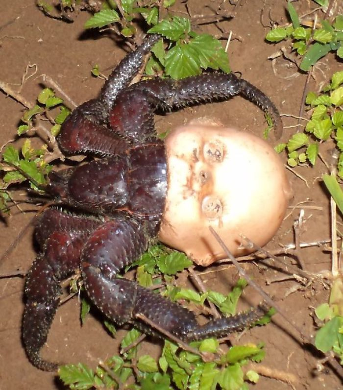 Крафт-отшельник с отбрасываемой головкой куклы для оболочки
