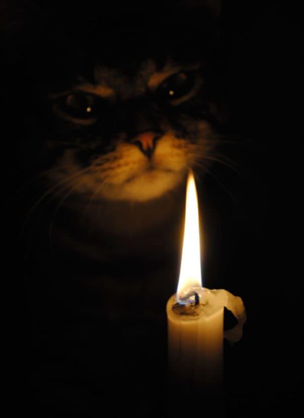 Metaphysic Cat