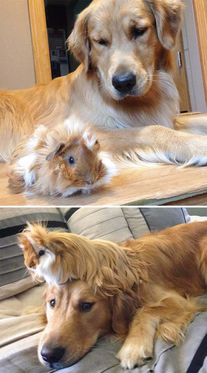 When Milo First Met Little Baby Stuart And Now