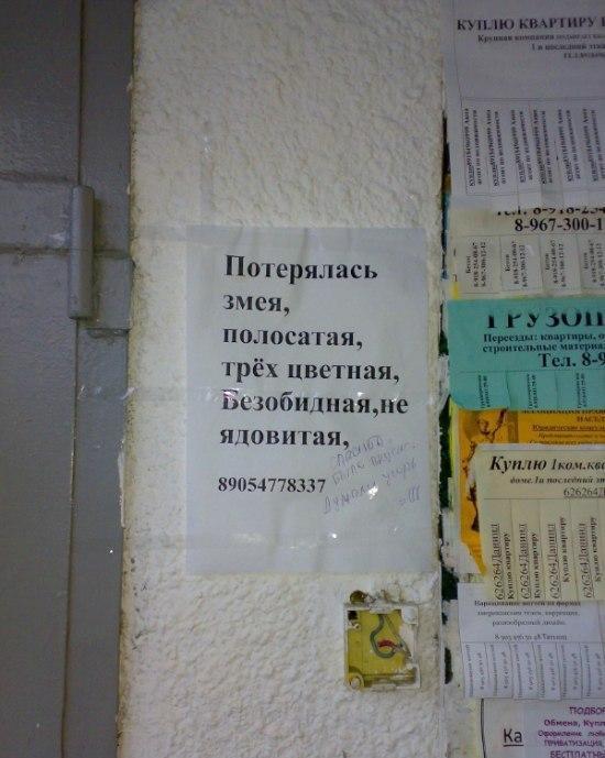 nadpisi-i-obiyavl-20