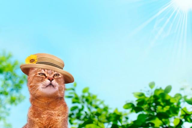 猫 暑さ対策 夏 熱中症